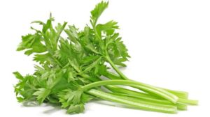 20 Macam Macam Sayuran selederi dan Khasiatnya