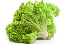 20 Macam Macam Sayuran selederi dan Khasiatnya selada