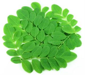 keripik daun kelor yang enak